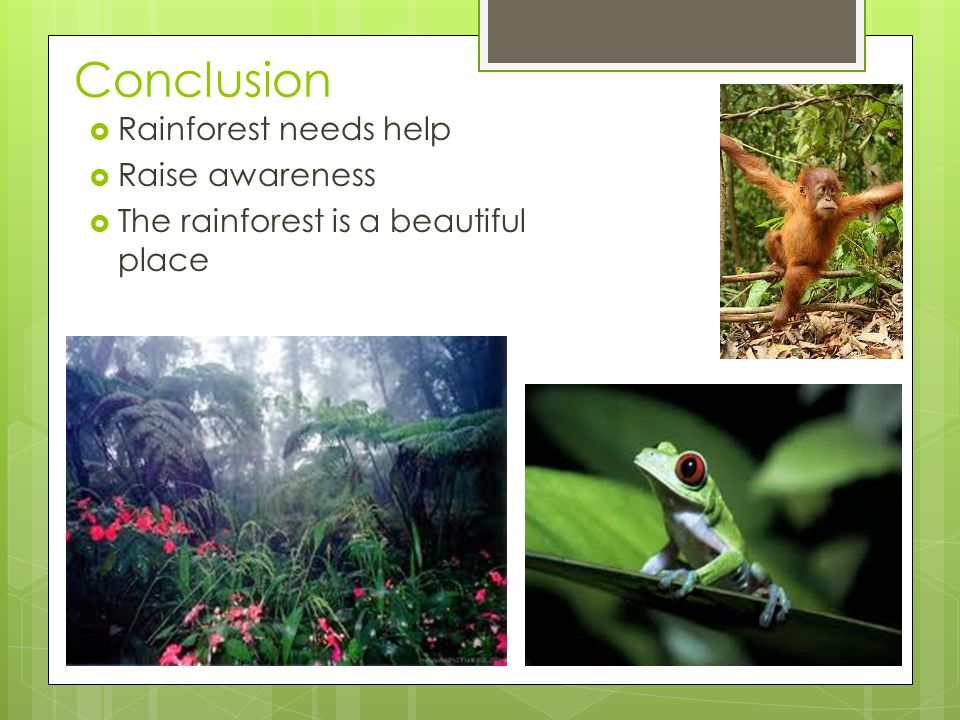 Conclusion  Rainforest needs help  Raise awareness  The rainforest is a beautiful place