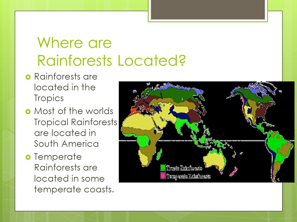 Where are Rainforests Located?  Rainforests are located in the Tropics  Most of the worlds Tropical Rainforests are located in South America  Tempe