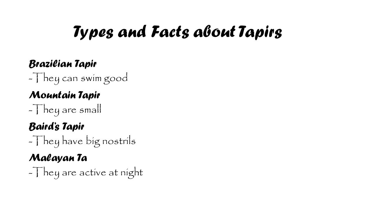 Types and Facts about Tapirs Brazilian Tapir -They can swim good Mountain Tapir -They are small Baird's Tapir -They have big nostrils Malayan Ta -They are active at night