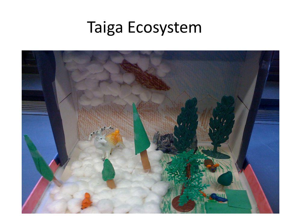 Taiga Ecosystem