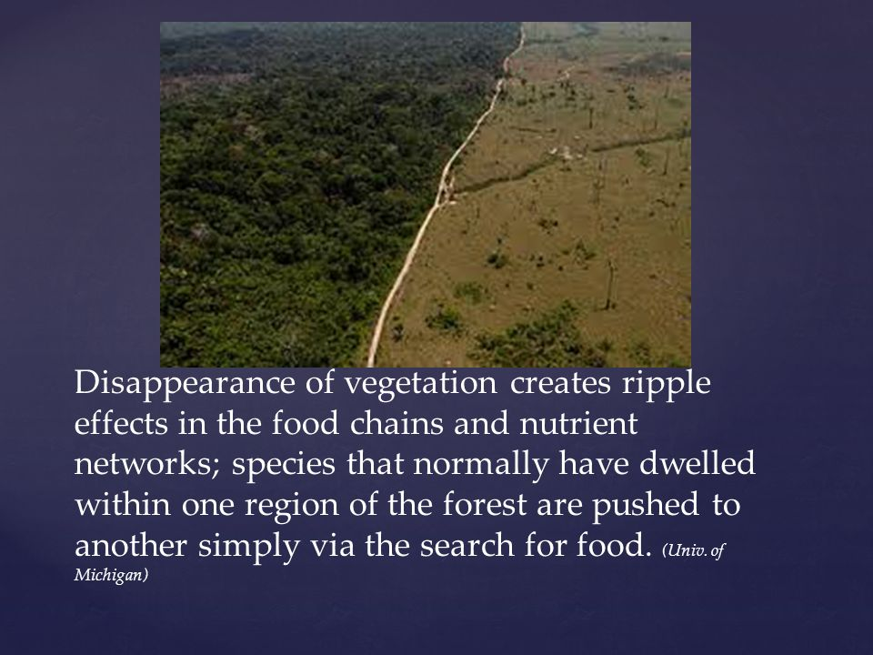 Disappearance of vegetation creates ripple effects in the food chains and nutrient networks; species that normally have dwelled within one region of the forest are pushed to another simply via the search for food.