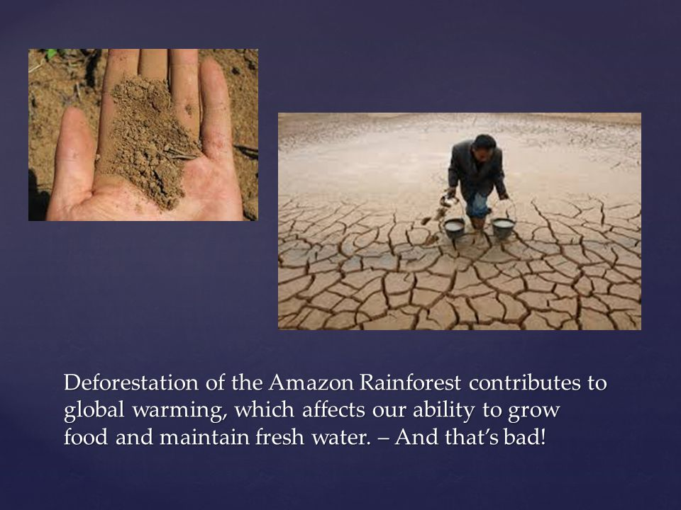 Deforestation of the Amazon Rainforest contributes to global warming, which affects our ability to grow food and maintain fresh water.