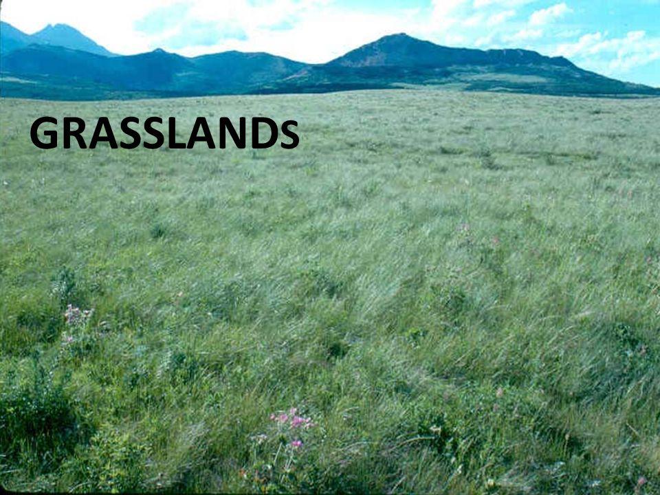 GRASSLAND S