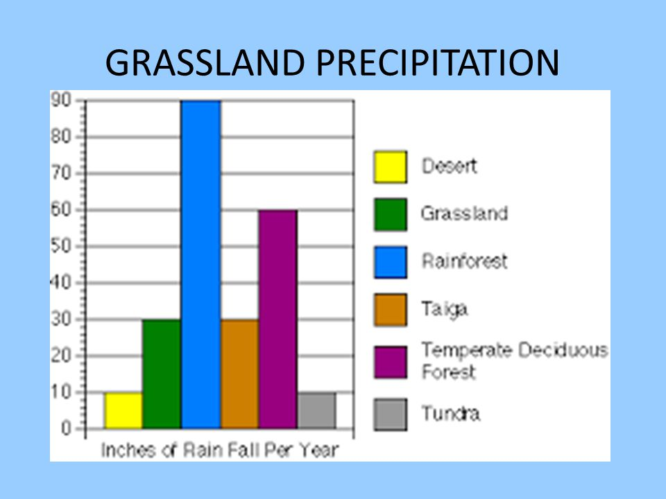 GRASSLAND PRECIPITATION