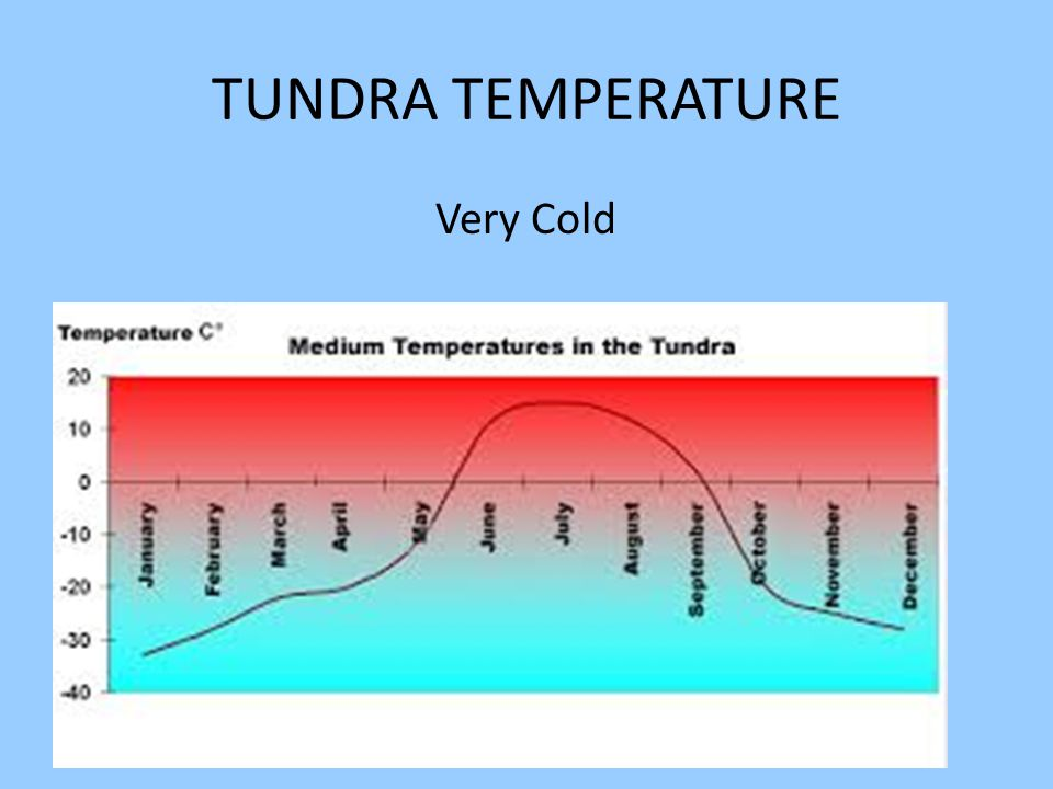 TUNDRA TEMPERATURE Very Cold