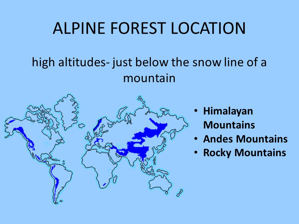 ALPINE FOREST LOCATION high altitudes- just below the snow line of a mountain Himalayan Mountains Andes Mountains Rocky Mountains