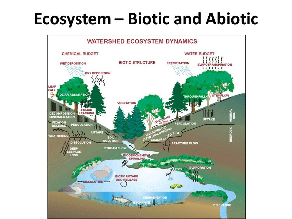 Ecosystem – Biotic and Abiotic
