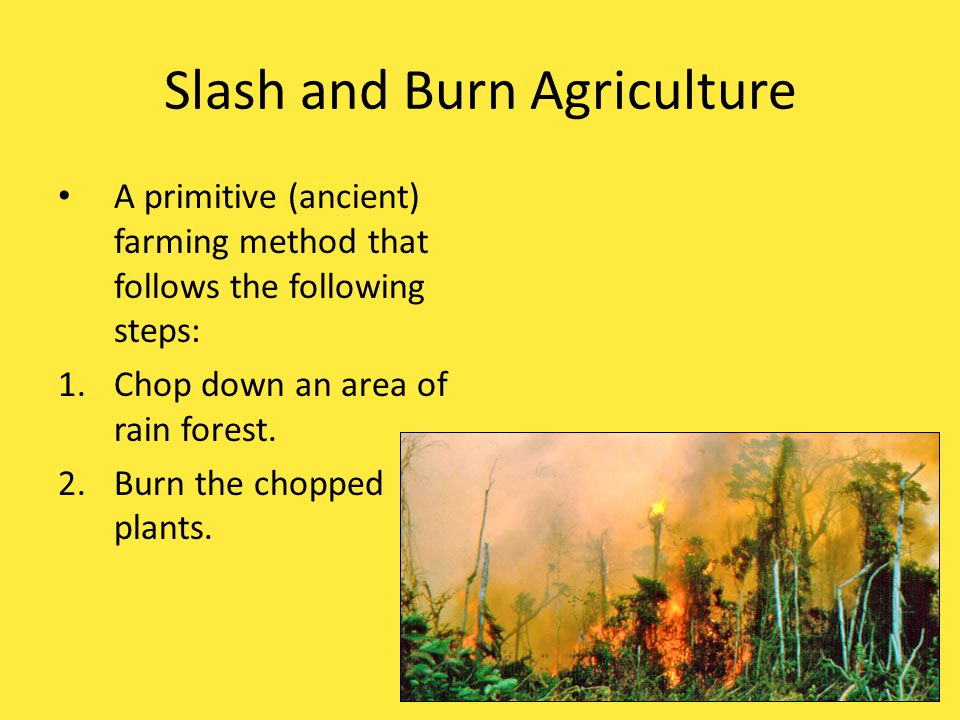 Slash and Burn Agriculture A primitive (ancient) farming method that follows the following steps: 1. Chop down an area of rain forest.