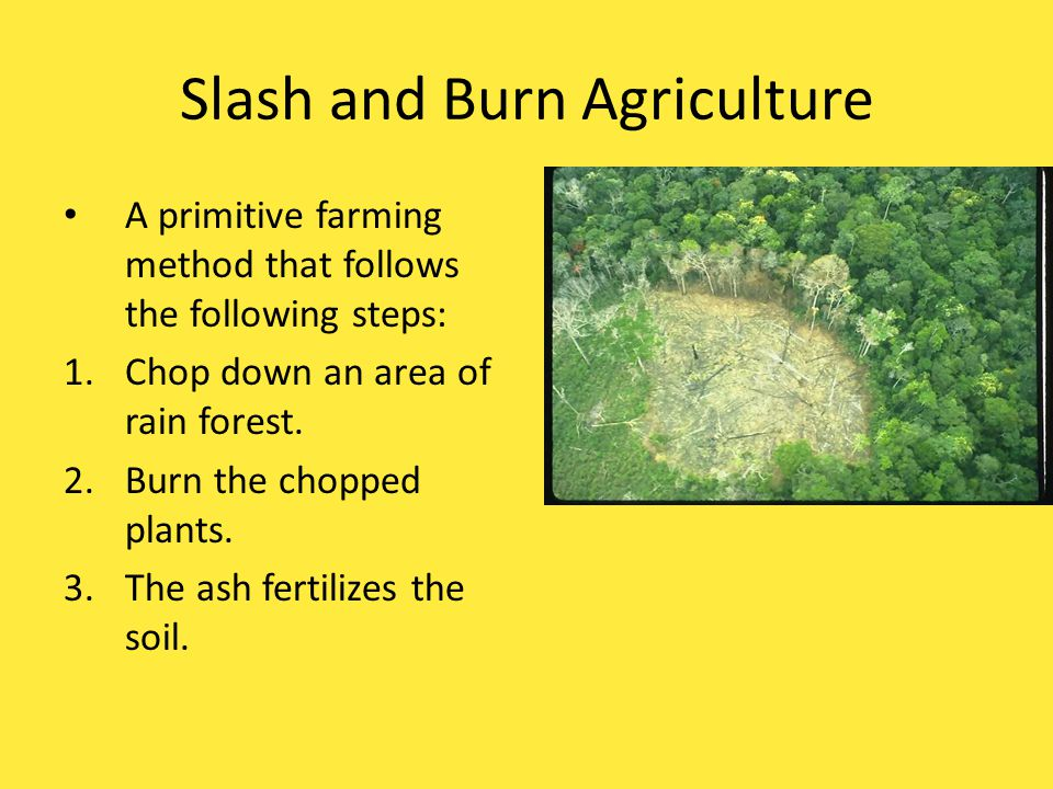 Slash and Burn Agriculture A primitive (ancient) farming method that follows the following steps: 1.Chop down an area of rain forest. 2.Burn the chopp
