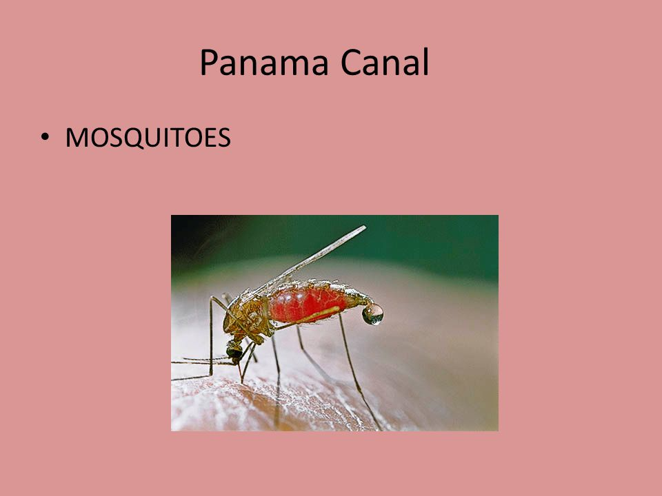 Panama Canal How do tropical diseases like malaria and yellow fever spread
