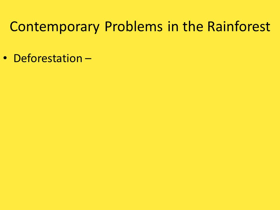 Contemporary Problems in the Rainforest