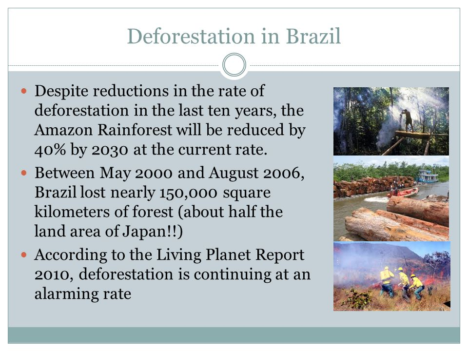 Deforestation in Brazil Despite reductions in the rate of deforestation in the last ten years, the Amazon Rainforest will be reduced by 40% by 2030 at the current rate.