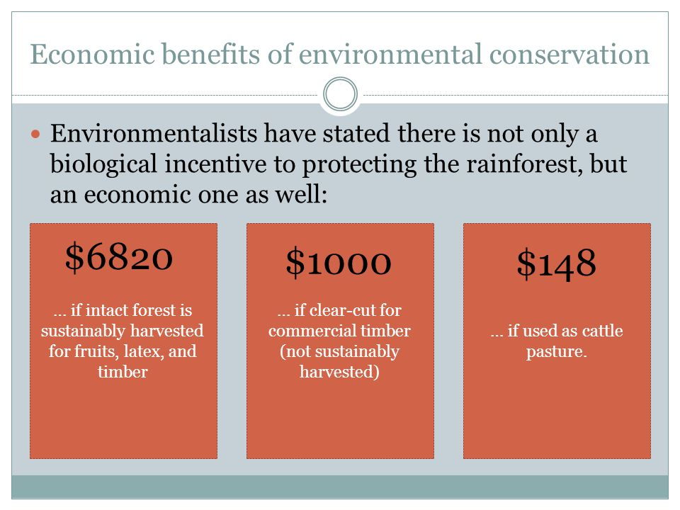 Economic benefits of environmental conservation Environmentalists have stated there is not only a biological incentive to protecting the rainforest, but an economic one as well: … if intact forest is sustainably harvested for fruits, latex, and timber … if clear-cut for commercial timber (not sustainably harvested) … if used as cattle pasture.