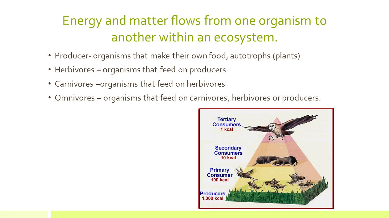 Energy and matter flows from one organism to another within an ecosystem. 3 Producer- organisms that make their own food, autotrophs (plants) Herbivor
