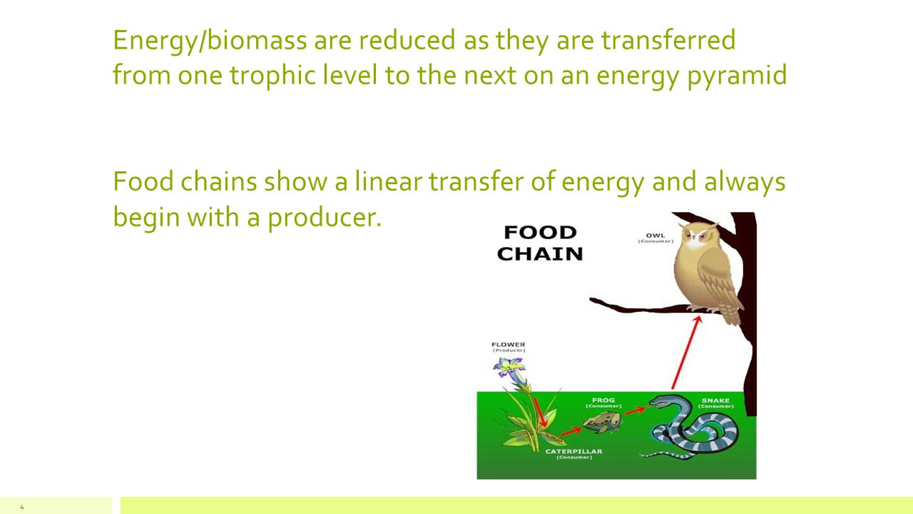Energy/biomass are reduced as they are transferred from one trophic level to the next on an energy pyramid Food chains show a linear transfer of energ