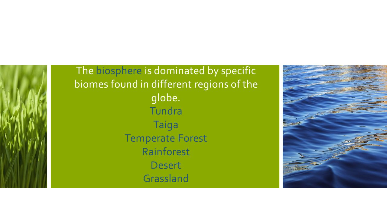 The biosphere is dominated by specific biomes found in different regions of the globe. Tundra Taiga Temperate Forest Rainforest Desert Grassland