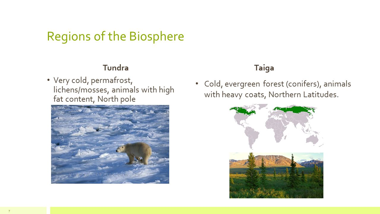 Regions of the Biosphere Temperate Forest Seasonal, deciduous forest, Northeast United States Rainforest Humid, dense tropical vegetation, diverse animal life, sub equator.