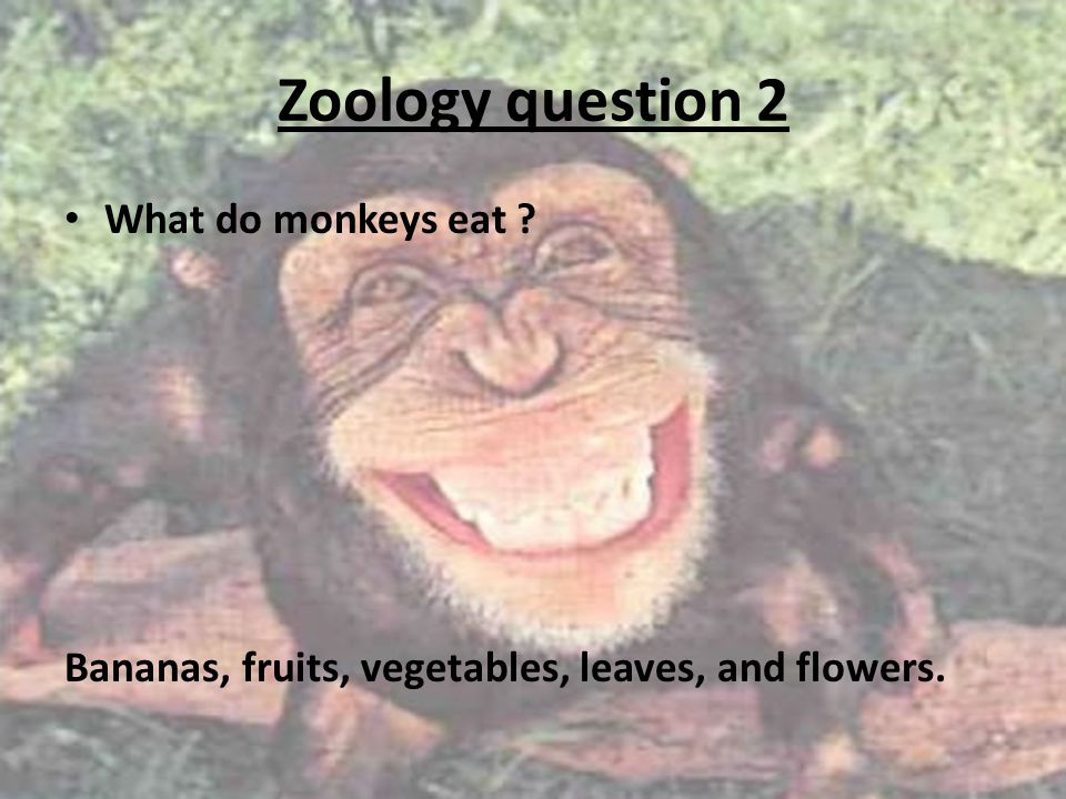 Zoology question 2 What do monkeys eat Bananas, fruits, vegetables, leaves, and flowers.