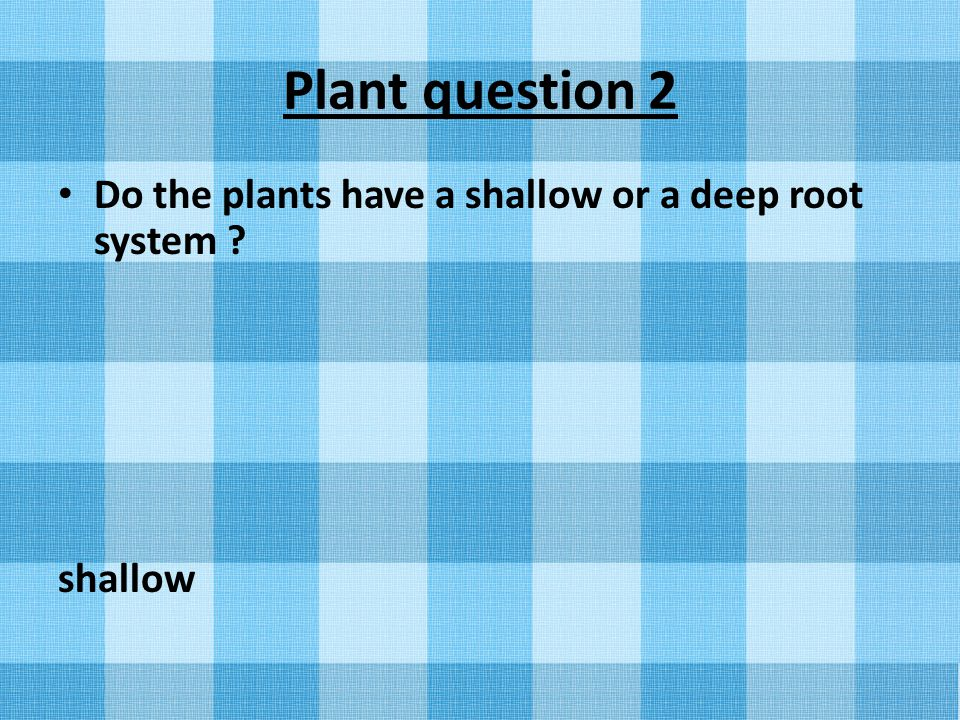 Plant question 2 Do the plants have a shallow or a deep root system shallow
