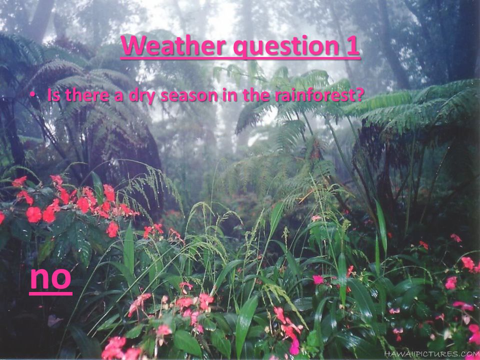 Weather question 1 Is there a dry season in the rainforest? Is there a dry season in the rainforest? no