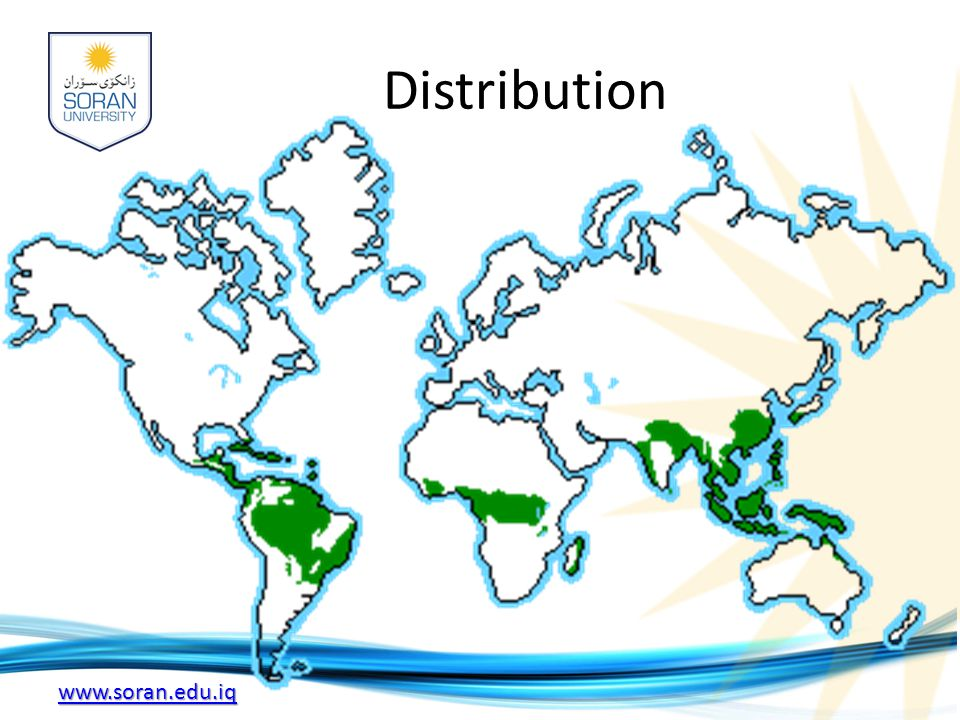 www.soran.edu.iq Distribution