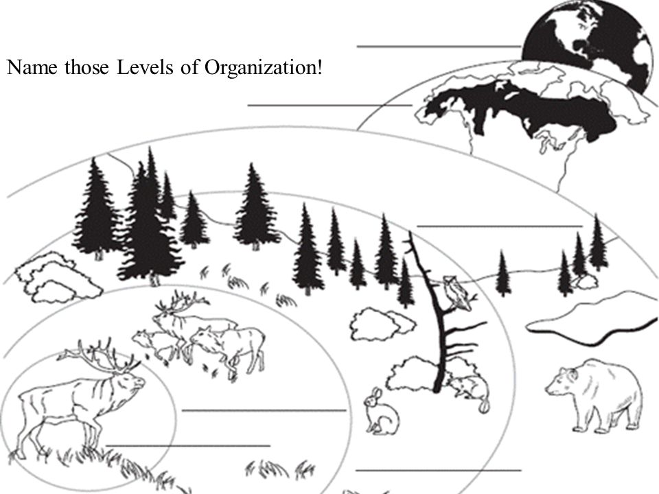 13.1 Ecologists Study Relationships Name those Levels of Organization!