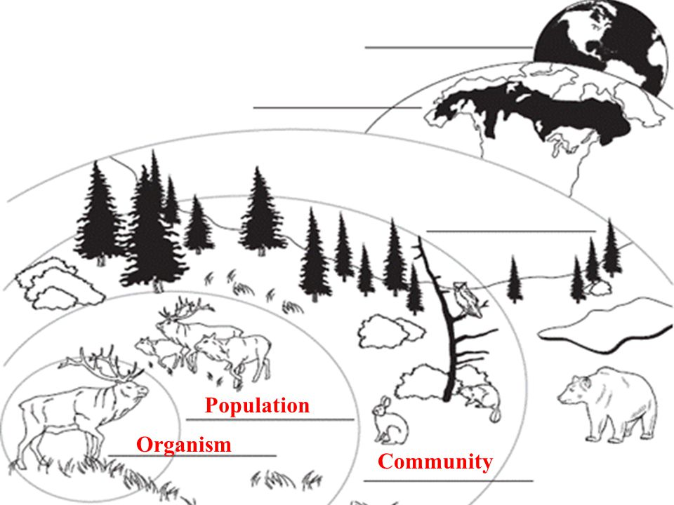 13.1 Ecologists Study Relationships Organism Population Community