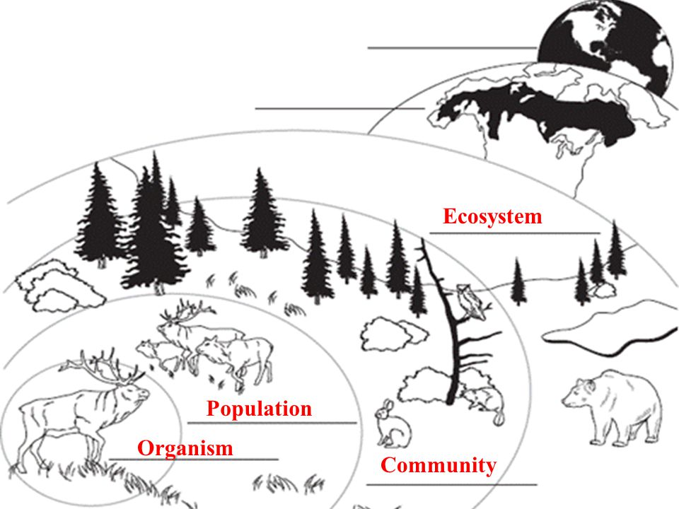 13.1 Ecologists Study Relationships Organism Population Community Ecosystem