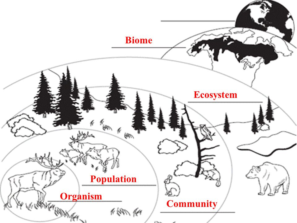 13.1 Ecologists Study Relationships Organism Population Community Ecosystem Biome