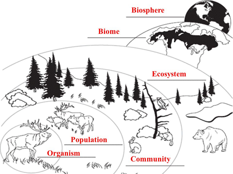 13.1 Ecologists Study Relationships Organism Population Community Ecosystem Biome Biosphere