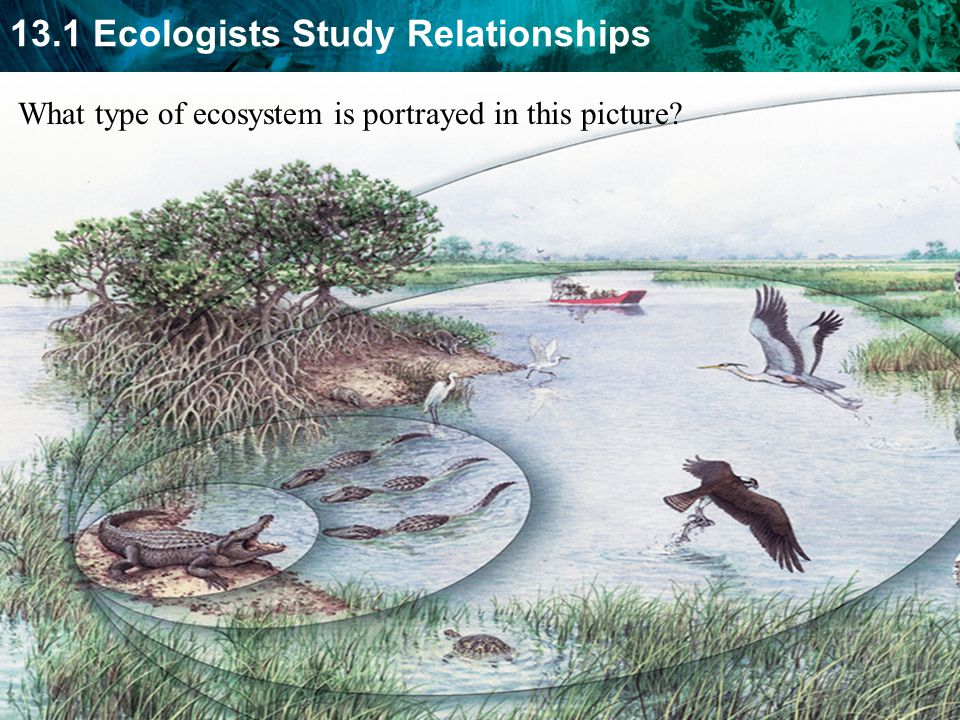 13.1 Ecologists Study Relationships What type of ecosystem is portrayed in this picture?