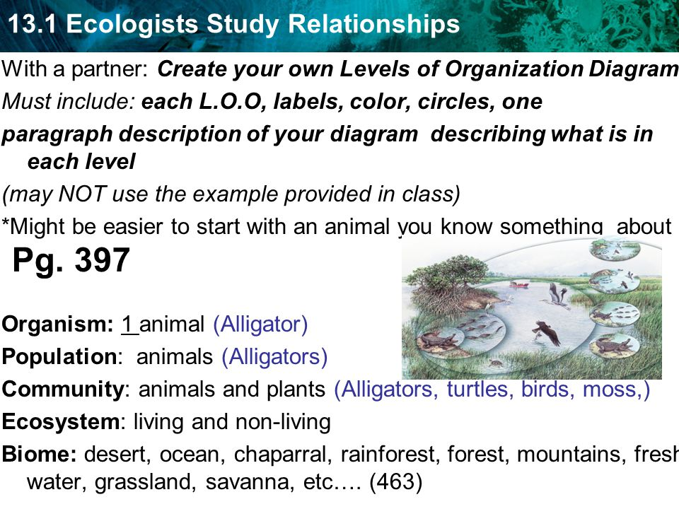 13.1 Ecologists Study Relationships With a partner: Create your own Levels of Organization Diagram Must include: each L.O.O, labels, color, circles, o