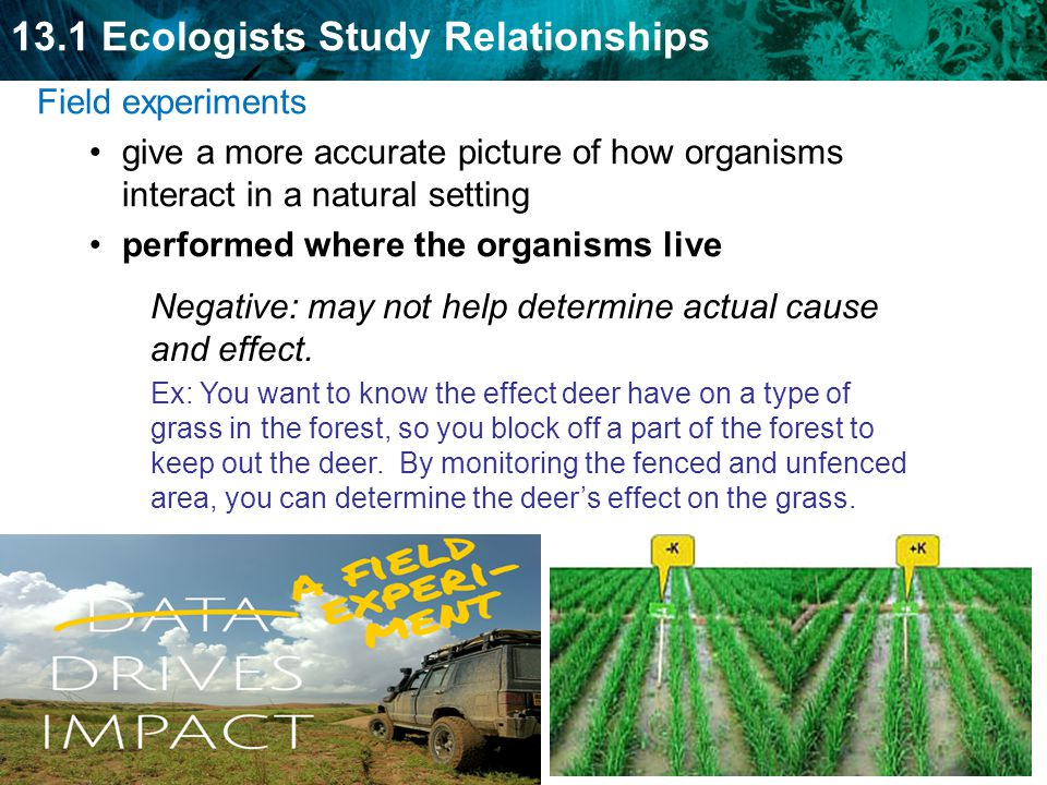 13.1 Ecologists Study Relationships Field experiments give a more accurate picture of how organisms interact in a natural setting performed where the