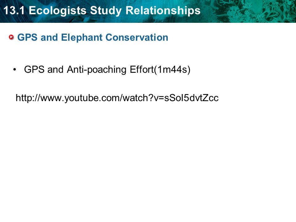 13.1 Ecologists Study Relationships GPS and Elephant Conservation GPS and Anti-poaching Effort(1m44s) http://www.youtube.com/watch?v=sSoI5dvtZcc