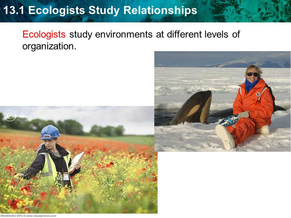 13.1 Ecologists Study Relationships Ecologists study environments at different levels of organization.