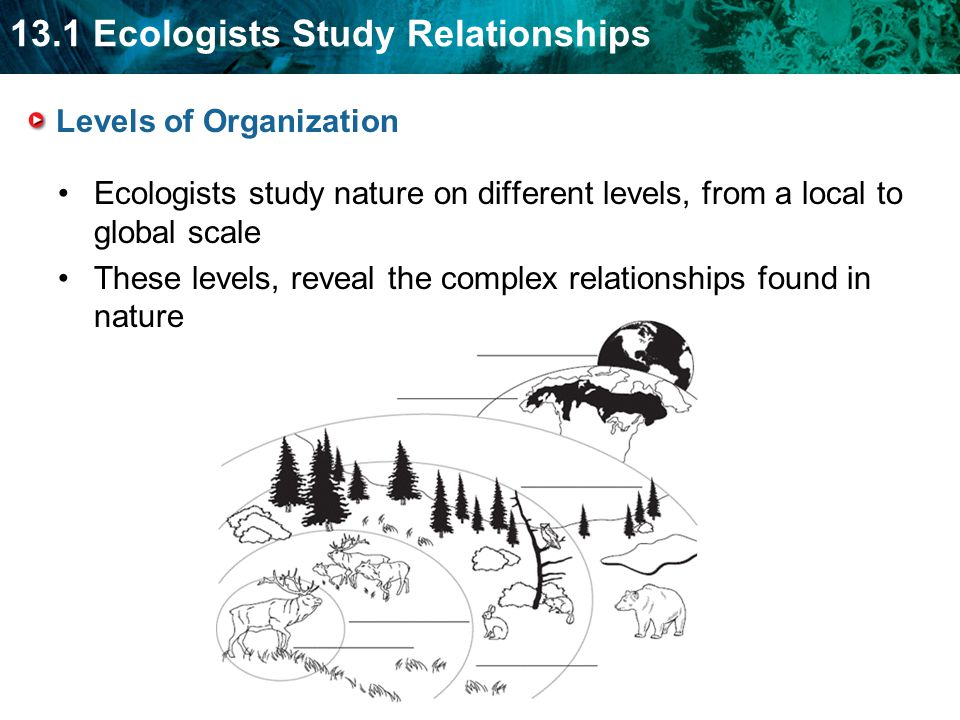 13.1 Ecologists Study Relationships Levels of Organization Ecologists study nature on different levels, from a local to global scale These levels, rev