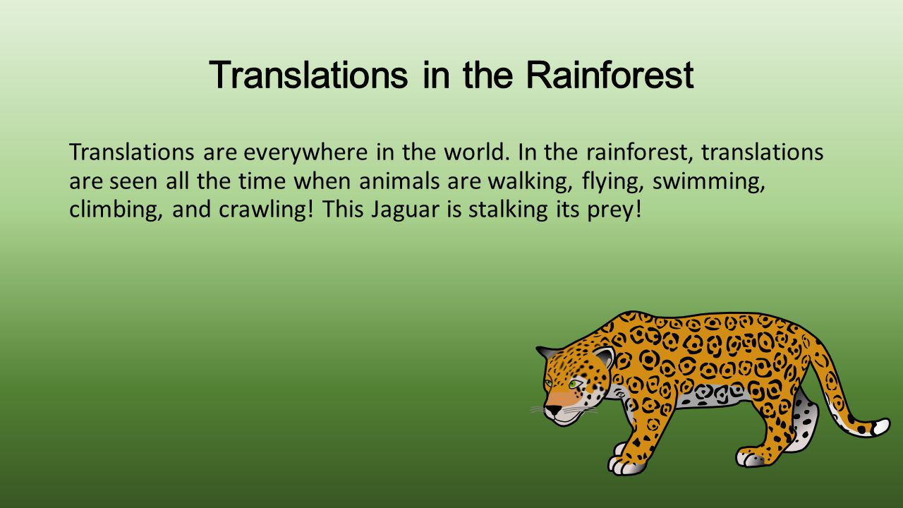 Translations are everywhere in the world. In the rainforest, translations are seen all the time when animals are walking, flying, swimming, climbing,