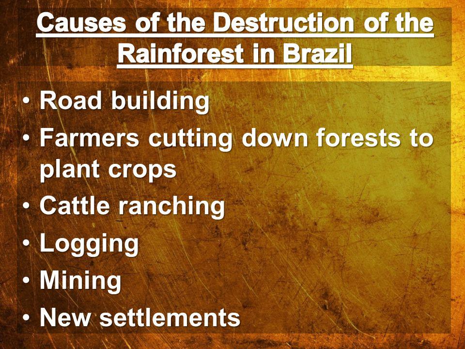 Road buildingRoad building Farmers cutting down forests to plant cropsFarmers cutting down forests to plant crops Cattle ranchingCattle ranching Loggi