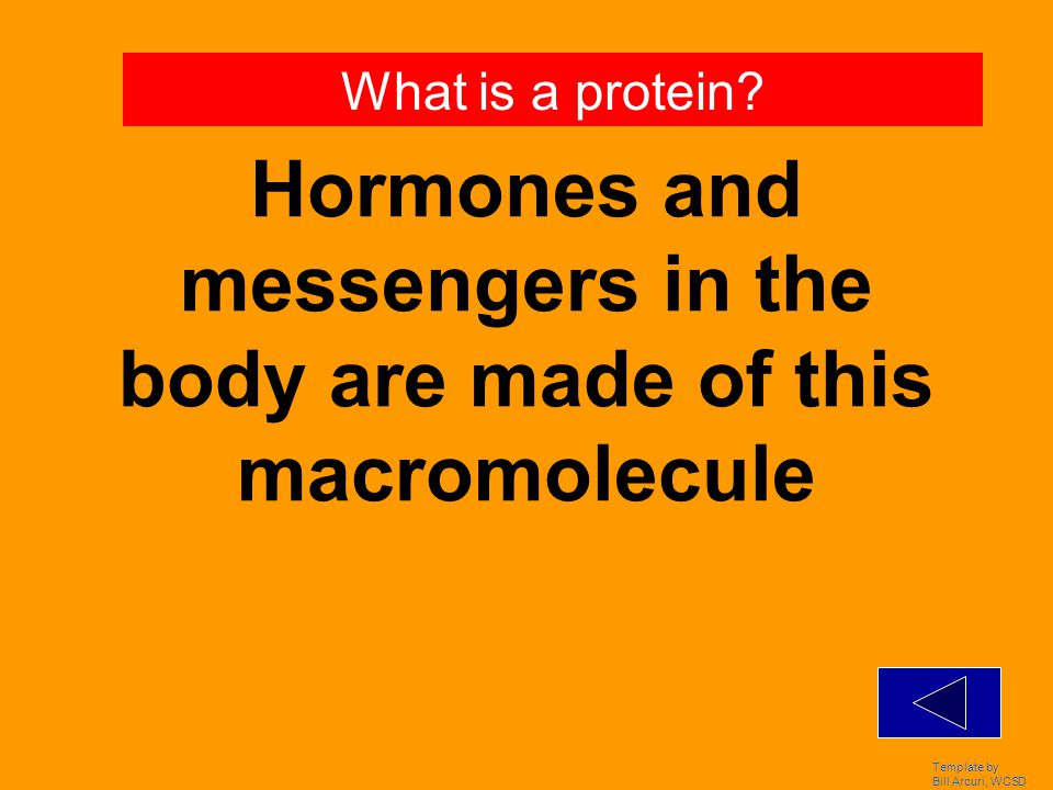 Template by Bill Arcuri, WCSD These macromolecules make up DNA & RNA. What are nucleic acids?