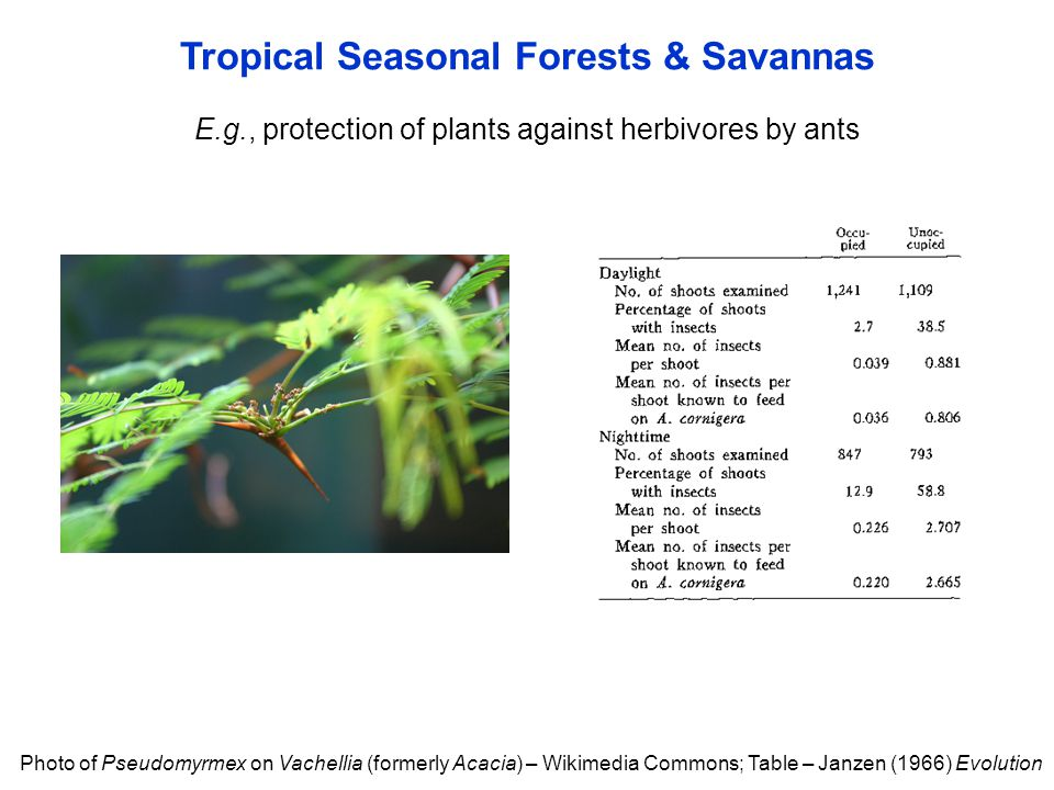 Tropical Seasonal Forests & Savannas Photo of Pseudomyrmex on Vachellia (formerly Acacia) – Wikimedia Commons; Table – Janzen (1966) Evolution E.g., protection of plants against herbivores by ants