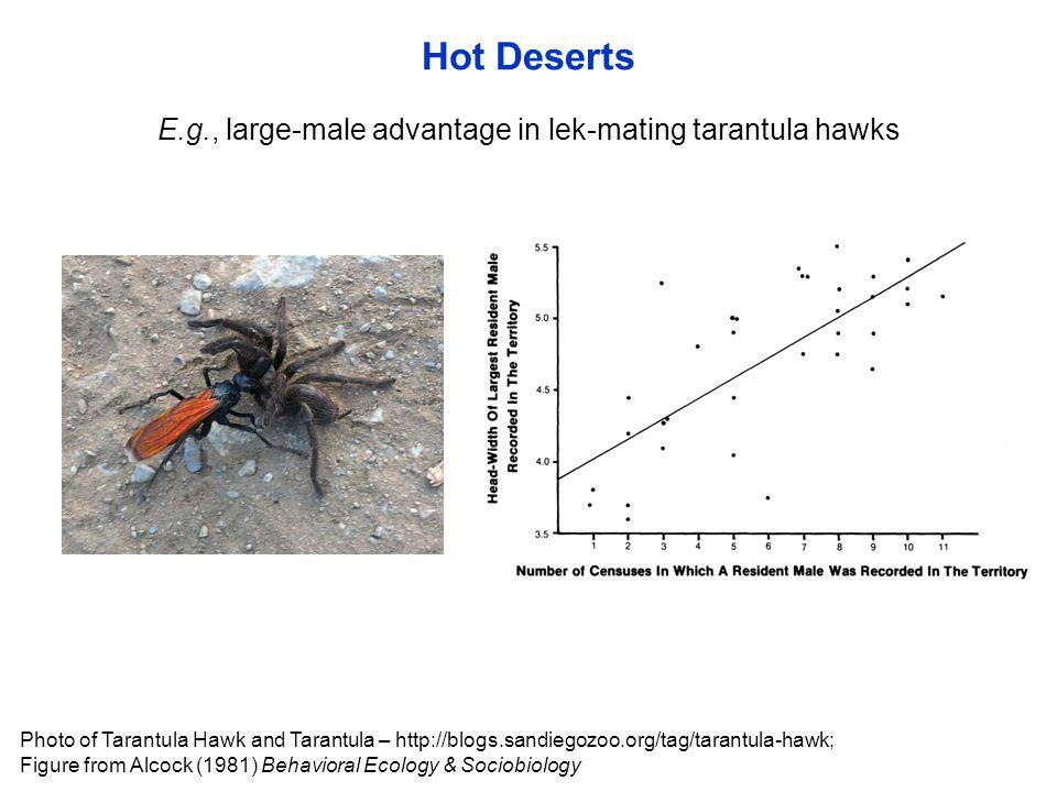 Hot Deserts E.g., large-male advantage in lek-mating tarantula hawks Photo of Tarantula Hawk and Tarantula – http://blogs.sandiegozoo.org/tag/tarantul