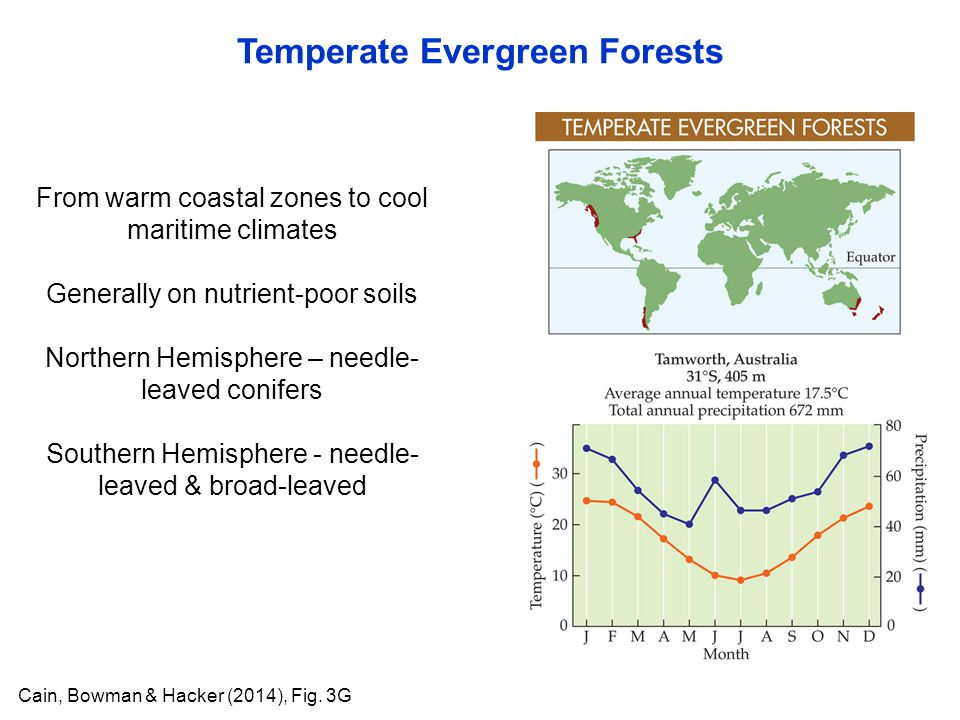 Temperate Evergreen Forests Cain, Bowman & Hacker (2014), Fig. 3G From warm coastal zones to cool maritime climates Generally on nutrient-poor soils N