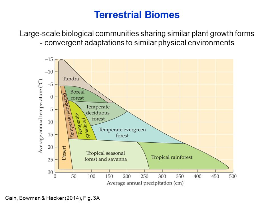 Large-scale biological communities sharing similar plant growth forms - convergent adaptations to similar physical environments Terrestrial Biomes Cai