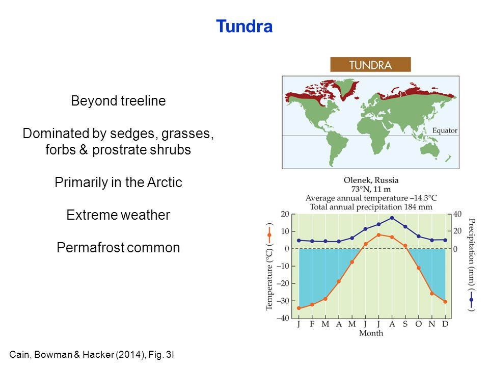 Tundra Cain, Bowman & Hacker (2014), Fig. 3I Beyond treeline Dominated by sedges, grasses, forbs & prostrate shrubs Primarily in the Arctic Extreme we