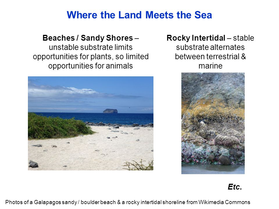 Where the Land Meets the Sea Photos of a Galapagos sandy / boulder beach & a rocky intertidal shoreline from Wikimedia Commons Rocky Intertidal – stab
