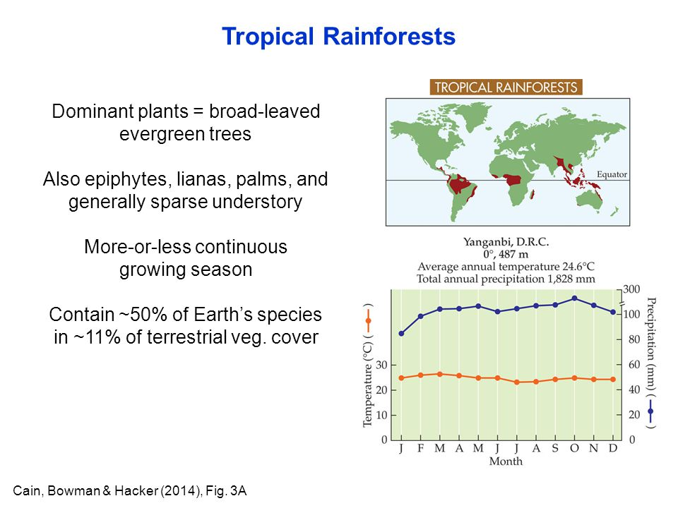 Dominant plants = broad-leaved evergreen trees Also epiphytes, lianas, palms, and generally sparse understory More-or-less continuous growing season C