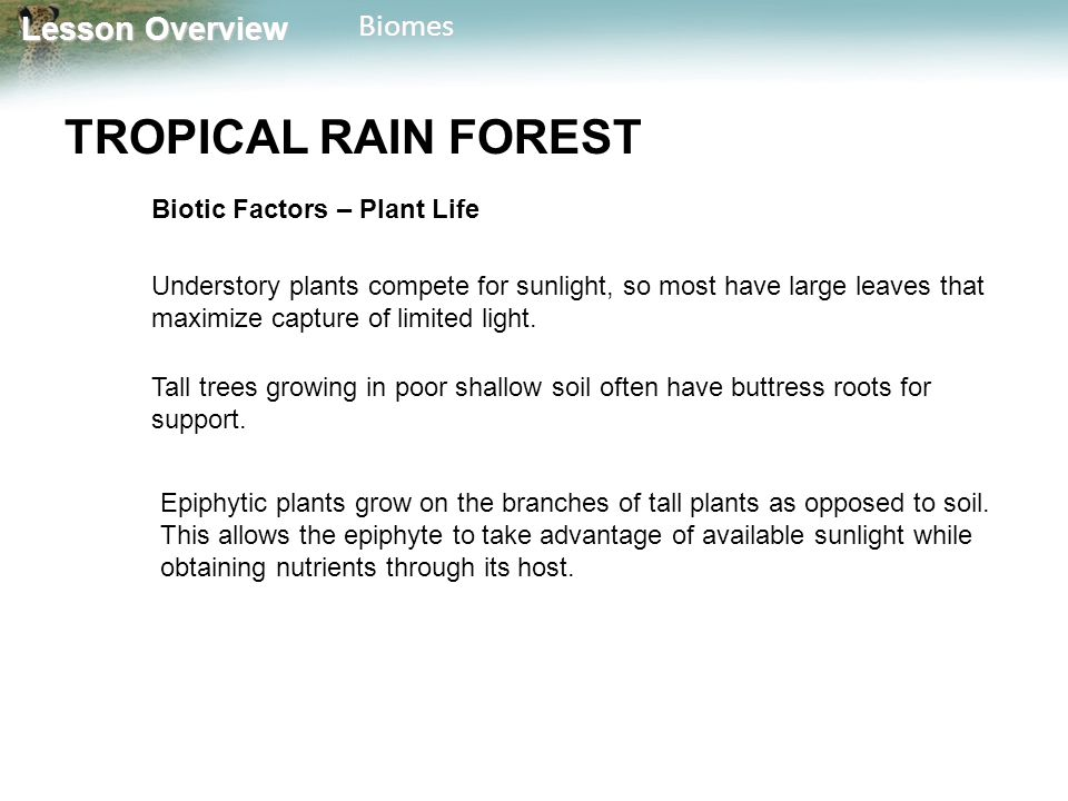 Lesson Overview Lesson OverviewBiomes TROPICAL RAIN FOREST Biotic Factors – Plant Life Understory plants compete for sunlight, so most have large leav