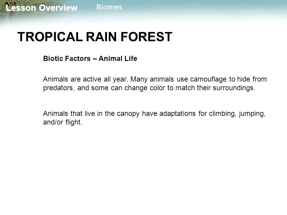 Lesson Overview Lesson OverviewBiomes TROPICAL RAIN FOREST Biotic Factors – Animal Life Animals are active all year. Many animals use camouflage to hi