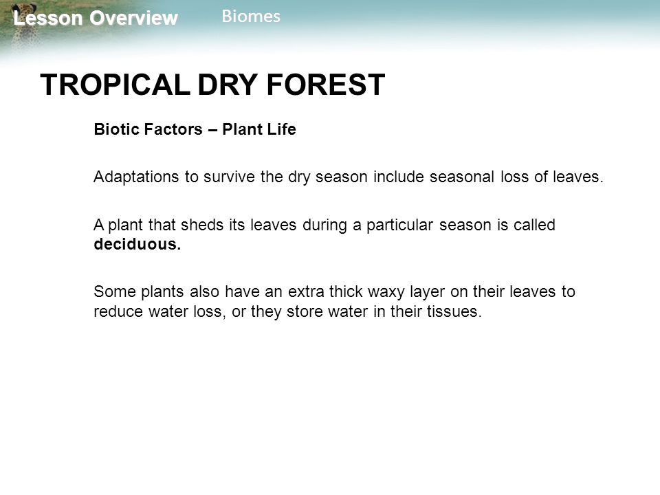 Lesson Overview Lesson OverviewBiomes TROPICAL DRY FOREST Biotic Factors – Plant Life Adaptations to survive the dry season include seasonal loss of l