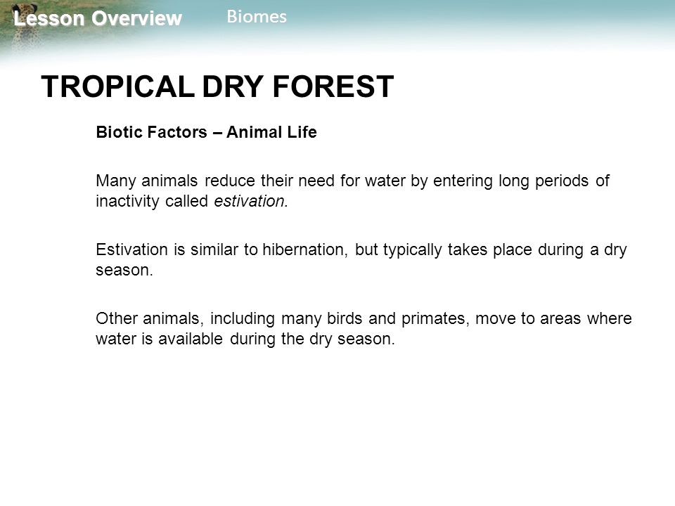 Lesson Overview Lesson OverviewBiomes TROPICAL DRY FOREST Biotic Factors – Animal Life Many animals reduce their need for water by entering long perio